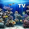 Aquarium HD √