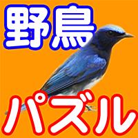 野鳥パズル