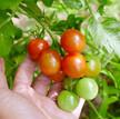 【便乗】今月のPV(Plants View)と収穫報告をします!
