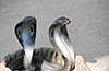 【コブラ効果】全くの逆効果になった5つの法律の画像