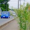 お散歩カメラ(16km)