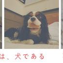 最高のイヌ・ネコ癒しソング、NHK Eテレ「0655」のアプリで愛犬の動画を作ってみました