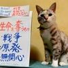 本日のポスター(2016年9月8日)