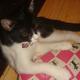 今日の黒猫モモ&白黒猫ナナの動画ー567