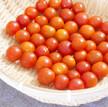 簡単で抜群に美味しい!天日干しドライトマトの作り方