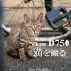 Nikon D750で猫を撮る。
