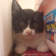 今日の黒猫モモ&白黒猫ナナの動画-565