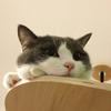 働き先に猫を連れていくべきか、置いていくべきか —渡り鳥プロジェクト—