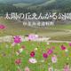 【旅フォト】日本最大級のコスモス園・太陽の丘えんがる公園の写真たち。