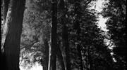 ブラ○モトシ 日光街道編 五日目 宇都宮宿~今市宿#3 かれこれ4時間杉並木、今市到着!