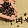 日本だとコーヒーの自家栽培は難しいそうです