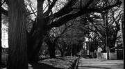 ブラ○モトシ 日光街道編 五日目 宇都宮宿~今市宿#1 宇都宮→徳次郎