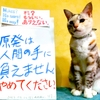本日のポスター(2016年9月2日)