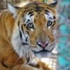 ガザ地区の動物園 ようやくすべての動物を保護