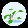 小水葱の花