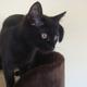 今日の黒猫モモ&白黒猫ナナの動画ー566