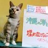 本日のポスター(2016年9月17日)