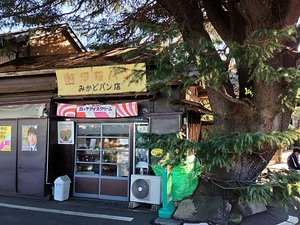 谷中のシンボル!樹齢90年超の「ヒマラヤ杉」と「みかどパン店」に胸がキュンキュン