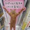 北大路ビブレの大垣書店の猫に衝撃を受ける