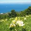 海が見えるゆり園、小樽のオーンズ春香山ゆり園に行ってきた。