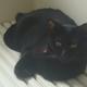 今日の黒猫モモ&白黒猫ナナの動画ー564