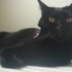 今日の黒猫モモ&白黒猫ナナの動画ー563