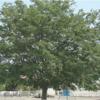 群馬の保育士の求人(転職)10選