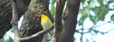 鳥見記録(2月~10月)