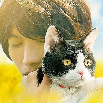 読書 感想 旅 文 リポート 猫