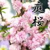 サラリーマン ブログ 管理人 魂の言葉 幸せメッセージ よっし~の裏名言-「相手目線で考えてみよう。」 「桜」