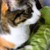 【愛猫日記】毎日アンヌさん#201