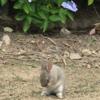 6月のうさぎ島 (大久野島)「いつもと違う光景」「いつものうさぎさん達」、かわいい毛づくろい