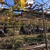 大阪平野にワイングラスかざした日曜日