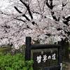哲学の道へさくらを見に行く②観光118…20210328京都