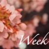 【Week 13】ベランダから感じる日本の季節と自分の感性の移り変わり