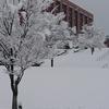 金沢大学角間キャンパス雪景色