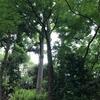 【シェラトン都ホテル東京の庭園】初夏の散策(一つだけ注意点)