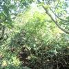 ◆'19/09/08     笹谷峠~山形神室~仙台神室③