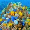タイ タオ島② ~カラフルな海、ハゼとエビの共生~