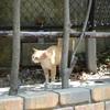 長崎旅行・番外編 「長崎は今日も猫だった」けど・・・