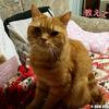 猫ヤマトのフミフミ講座