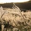 すすきが黄金に輝く秋の『曽爾高原』にいってみた in奈良