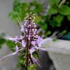 バルコニーでは色々な花が咲いています
