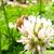 春のうららの錦江湾公園、ちらり。