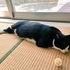 【猫あるある】暑い日の光景