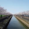 あともう少しの桜と AR君のブラックZと サンコック