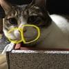 猫のぷくぷく「ひげ袋」の秘密。ウイスカーパッドの構造と役割