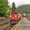 台湾へ一人旅に出ていました ~ハイライト編 「阿里山森林鉄道」他移動はほぼ鉄道で!!