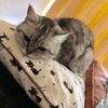 うちの猫がとにかくあざとかわいい件。猫飼いさんにオススメのグッズも紹介!