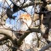 【ギリシャ・アイギナ島】かわいい島の住人、『猫』ちゃんたちに癒されようの巻。